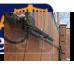 Came Krono 310 автоматика для распашных ворот
